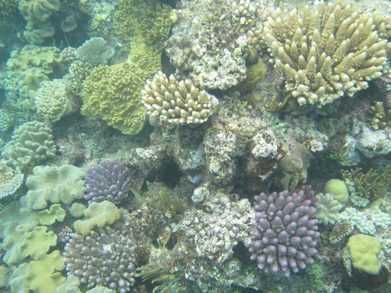 Reef Experience : The corals