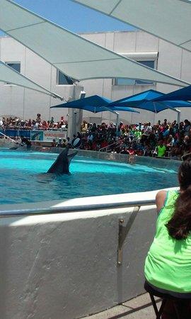 Texas State Aquarium: 2014