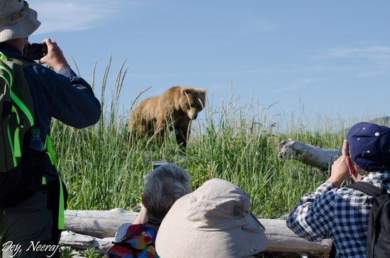 Alaska Bear Adventures: Low and Quiet around Bear ..it was breathtaking experience !