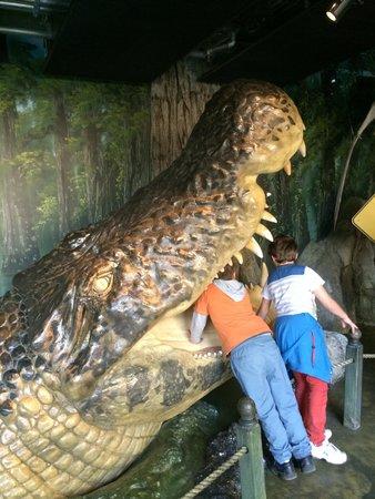 Wild Life Sydney Zoo: ワニの模型