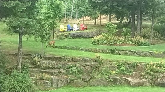 Stone Wood Bed and Breakfast: Deer!