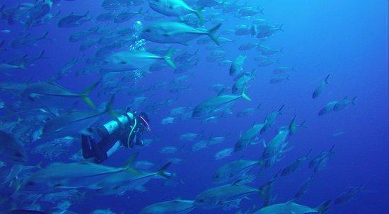 Hamanasi Adventure and Dive Resort: Deep Water Dive
