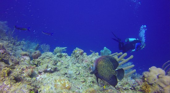 Hamanasi Adventure and Dive Resort : Grey Angle