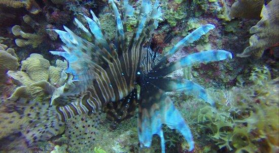 Hamanasi Adventure and Dive Resort: Pretty but unwanted