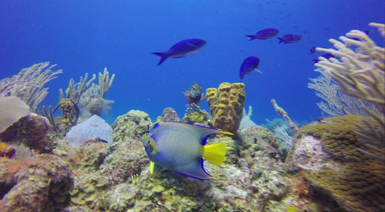 Hamanasi Adventure and Dive Resort : Queen Angle
