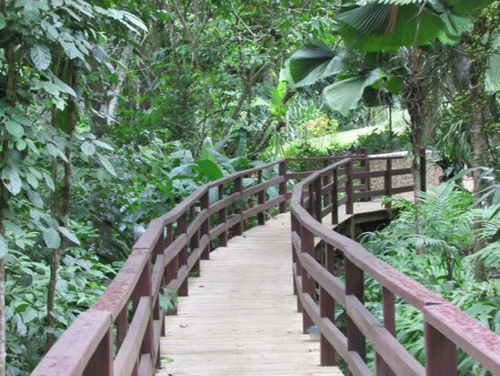 duPlooy's Jungle Lodge: Boardwalk to Jungle Lodge Rooms