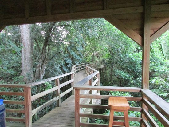 duPlooy's Jungle Lodge : Boardwalk leading to view of river
