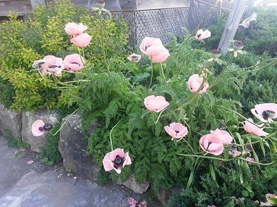 Ancient Cedars Cafe: front door flowers
