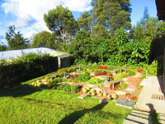 La Montana Magica: Zen garden