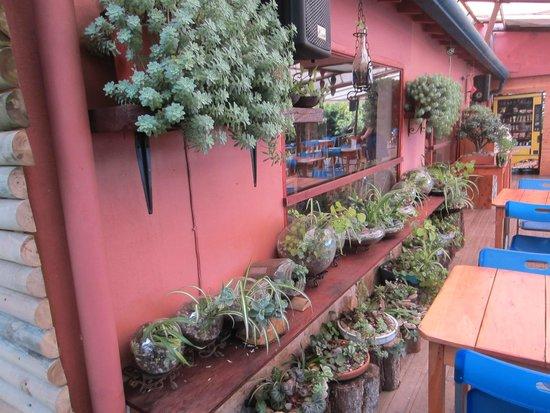 La Montana Magica: Succulents