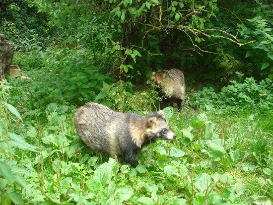 Wildpark Bad Mergentheim: Os animais fica em espaços bem conservados e apropriados.
