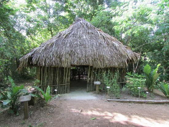 Belize Botanic Gardens: Maya House (traditional Maya living)