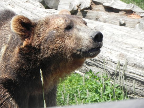 Montana Grizzly Encounter: Jake is on our scent