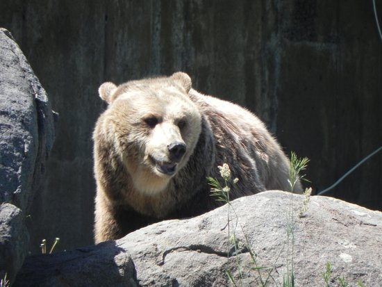 Montana Grizzly Encounter: Jake likes a crowd