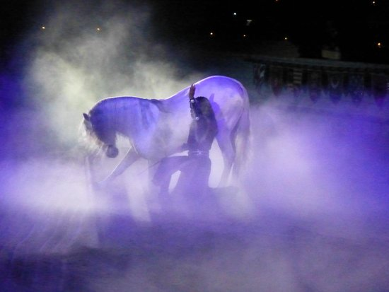 Medieval Times Dinner & Tournament : majestic horses