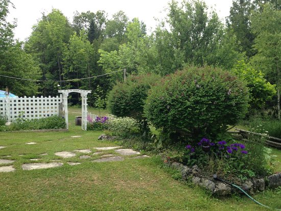 The Purple Frog Bed and Breakfast: The garden