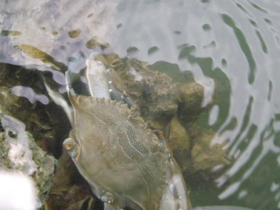 Chart House Suites on Clearwater Bay: sea life on dock