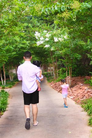 L'Auberge de Sedona : the lush trees