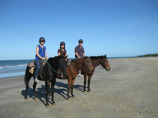 Cape Tribulation Horse Rides: On the beach