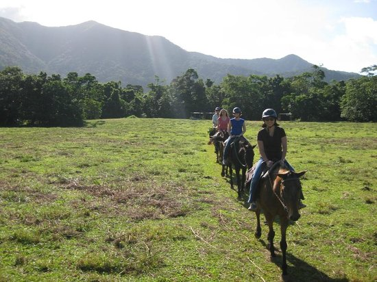 Cape Tribulation Horse Rides: Leaving the stables
