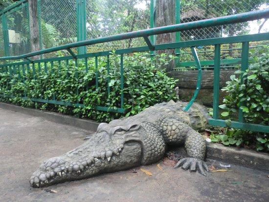 Zoo and Botanical Gardens: 作り物のワニ