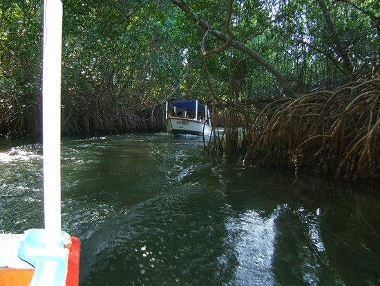 Hesperia Playa El Agua: mangrove
