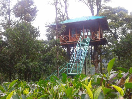 Dream Catcher Plantation Resort: Tree House