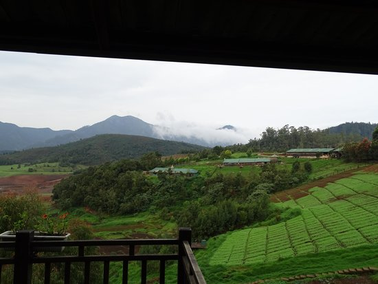 Destiny Farmstay: Room View