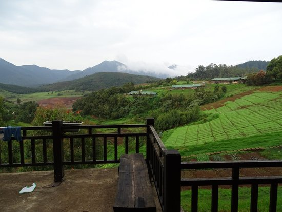 Destiny Farmstay : View from the room