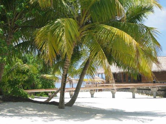 Maafushivaru: spiaggia