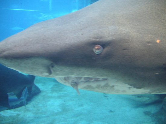 uShaka Sea World Aquarium: Durban. uShaka Sea World. Apr. 2014