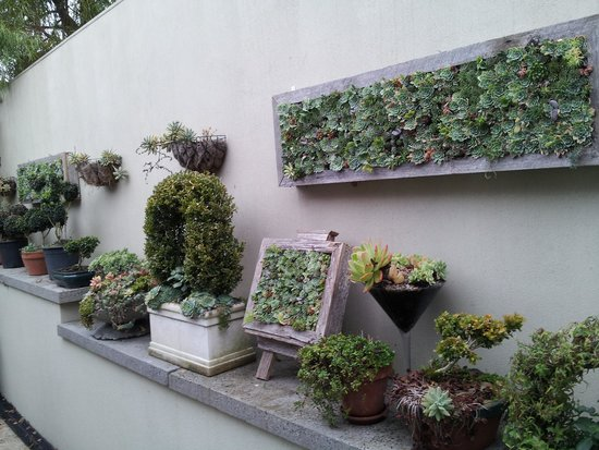 Topiary Haven: succulent artwork ..