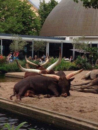 ARTIS Amsterdam Royal Zoo : Прямо рядом со входом в зоопарк