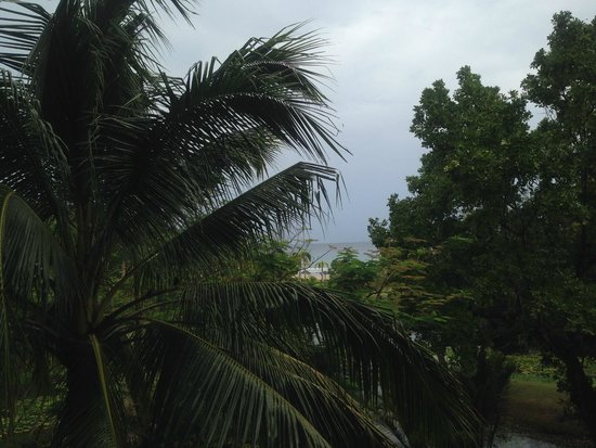 "Nexus Resort & Spa Karambunai : ""ocean panorama view' room, all view blocked by trees"