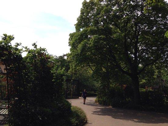 ARTIS Amsterdam Royal Zoo : Кругом прекрасная парковая зона
