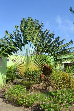 Cabier Ocean Lodge: Garten