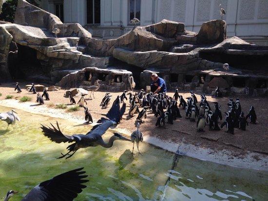 ARTIS Amsterdam Royal Zoo : Кормление пингвинов