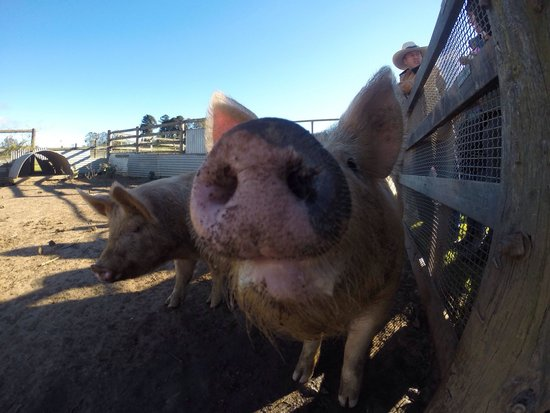 Mowbray Park Farmstay Holidays: Feeding the animals is great fun for the kids!