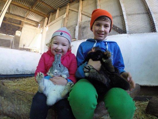 Mowbray Park Farmstay Holidays: Kids will love the nursery of animals
