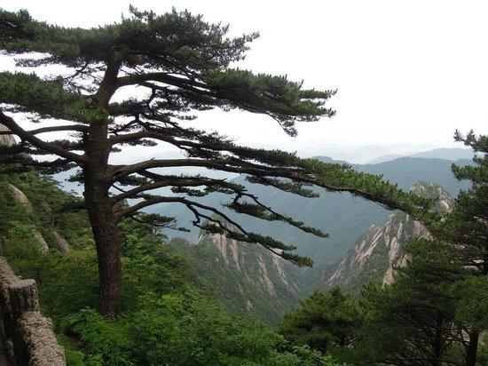 Shixin Peak: 迎客松(有很多人拍照的知名景點,拍照需排隊)