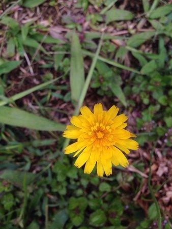Kiram's Village: More flowers