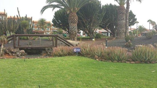 Barcelo Castillo Beach Resort : hotel grounds