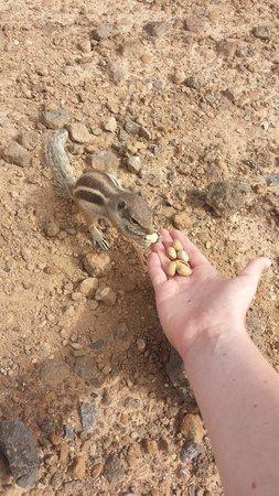 Barcelo Castillo Beach Resort : feeding the chipmonks