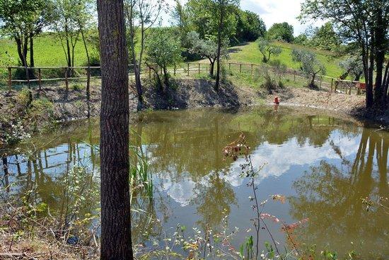 Casale Fusco : the pond