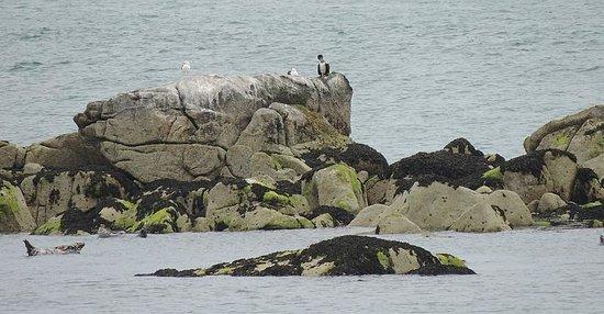 Dalkey Island: Seals basking