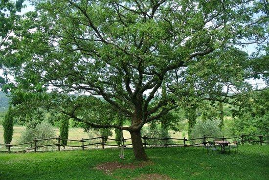 La Contea Degli Angeli : Dolci pisolini sotto la grande quercia