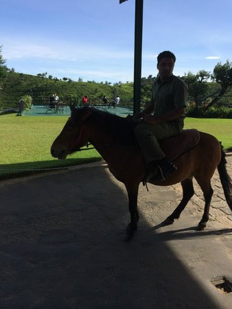 Heritance Tea Factory: horse on site