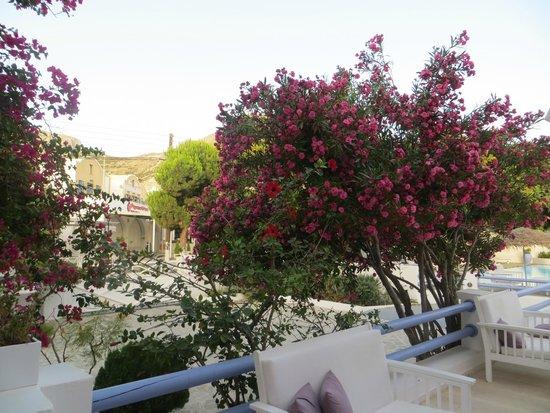 Acqua Vatos Hotel: Yard