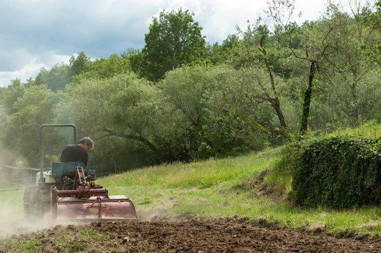 Agriturismo Azienda Agricola il Pozzo: working for our kitchen garden lavorando per il nostro orto