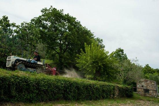 Agriturismo Azienda Agricola il Pozzo: preparando il nostro orto working on our kitchen garden